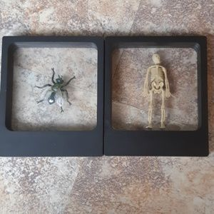 Halloween Decorations mini Skeleton XL Fly in case